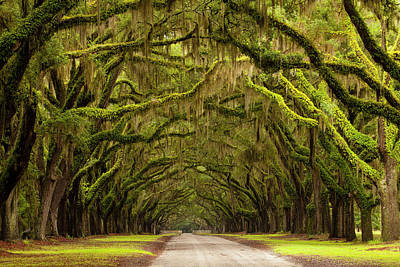 Wormsloe Photograph - Usa, Georgia, Savannah, Oak Lined Drive by Joanne Wells