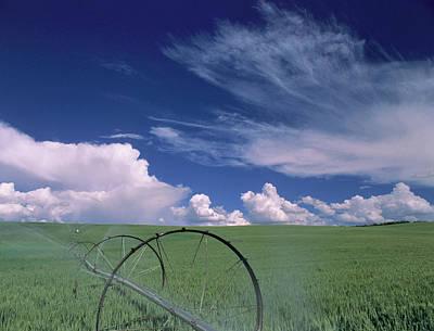 Usa, Idaho, Green Wheat Field, Clouds Art Print