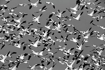 Of Birds Photograph - Usa, New Mexico, Bosque Del Apache by Hugh Rose