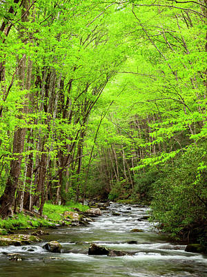 Green Cherokee Photograph - Usa, North Carolina, Great Smoky by Ann Collins