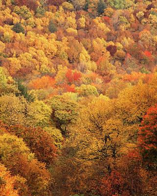 Adam Photograph - Usa, North Carolina, View Of Great by Adam Jones
