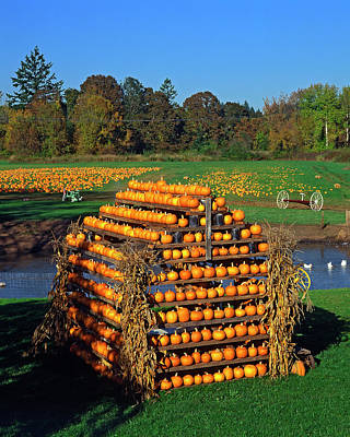 Pumpkin Patch Photograph - Usa, Oregon, Willamette Valley by Jaynes Gallery