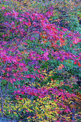 Usa, Virginia, Mclean Art Print