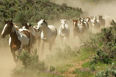 Usa, Washington, Malaga, Running Horses Art Print