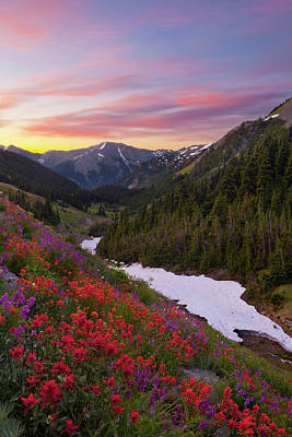 Vetch Photograph - Usa Washington State, Olympic National by Gary Luhm