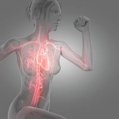 Vascular System Of Jogger Art Print by Sebastian Kaulitzki