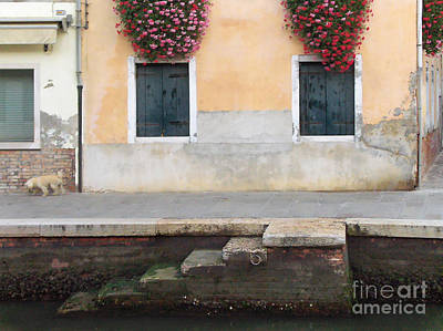 Painting - Venice Canal Shutters With Dog And Flowers Horizontal by Robyn Saunders