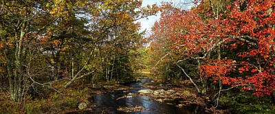 Photograph - View Of Stream In Fall Colors, Maine by Panoramic Images