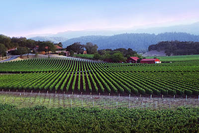 Photograph - Vineyard 29 by Xueling Zou