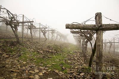 Vineyard In The Fog Art Print