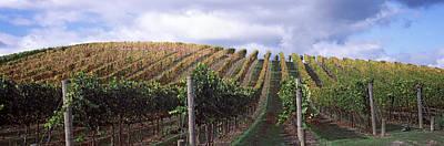 Napa Valley Photograph - Vineyard, Napa Valley, California, Usa by Panoramic Images