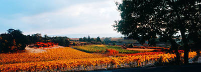 Winemaking Photograph - Vineyards In The Late Afternoon Autumn by Panoramic Images