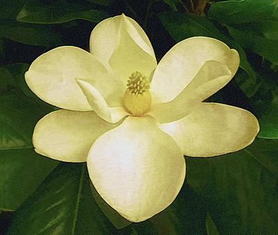 Vintage Magnolia Art Print