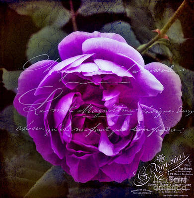 Photograph - Vintage Pink Rose by Karen Lewis