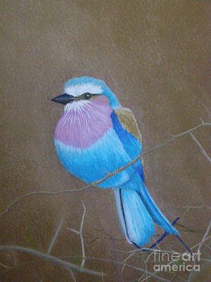 Pastel - Violet-breasted Roller Bird by Lynn Quinn