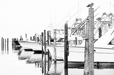 Commercial Design Mixed Media - Waiting For Food - Outer Banks by Dan Carmichael