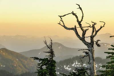 Snag Photograph - Washington, Cascade Mountains, Mount by Matt Freedman