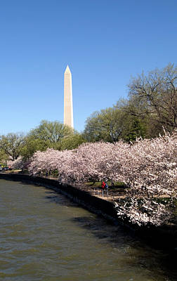 Cherry Blossom Festival Photograph - Washington, Dc, Cherry Blossom Festival by Lee Foster