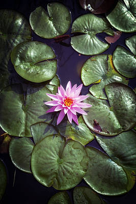 Lily Photograph - Water Lily by Joana Kruse