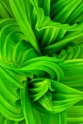 Abstract In Nature Photograph - Wavy Green by Jeff Sinon
