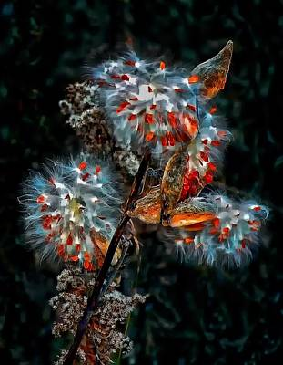 Weed Galaxy  Art Print by Steve Harrington