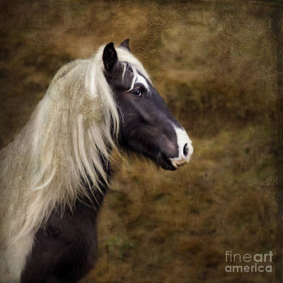 Welsh Cob Art Print