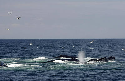 Guns Arms And Weapons - Whale Watching At Stellwagen Bank National Marine Sanctuary by James Connor