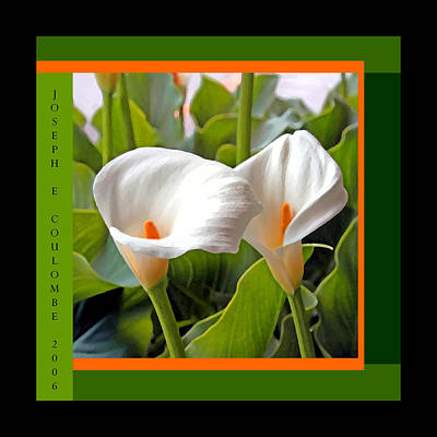 Digital Art - 2 White Lily Flowers by Joseph Coulombe
