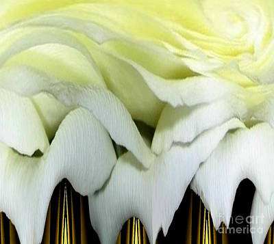 Photograph - White Rose Polar Coordinates by Rose Santuci-Sofranko