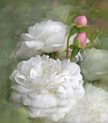 Photograph - White Roses Bouquet by Jennie Marie Schell