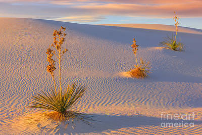 White Sands National Monument Art Print by Henk Meijer Photography