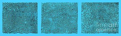Whorl, Loop, And Arch Fingerprints Art Print