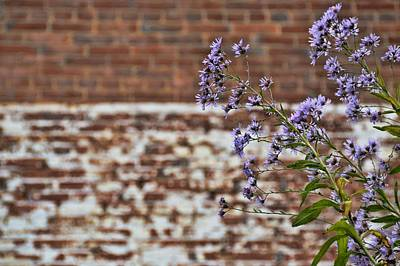 Photograph - Wild Blooms by JAMART Photography