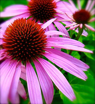 Photograph - Wild Daisies by Tracy Male
