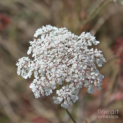 Photograph - Wild Flower by Katy Mei