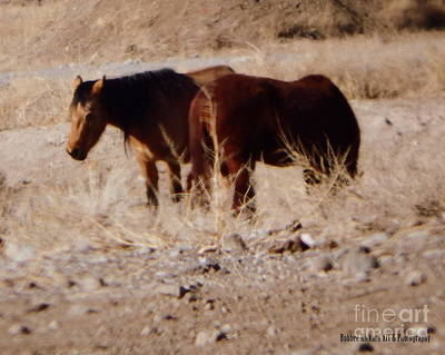 Photograph - Wild Nevada Mustangs by Bobbee Rickard