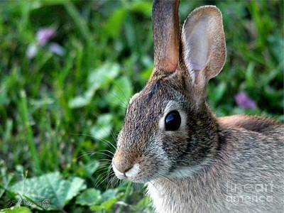 Photograph - Wild Rabbit by J McCombie