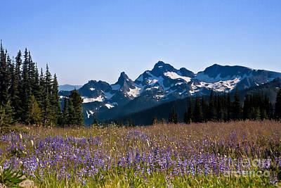 Photograph - Wildflowers In The Cascades by Ronald Lutz