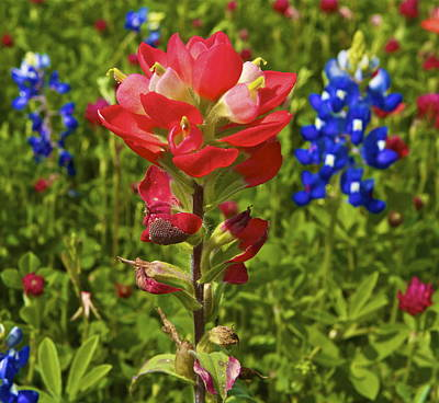 Art Print featuring the  Wildflowers by John Babis
