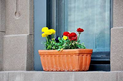 Photograph - Spring Window Dressing by JAMART Photography