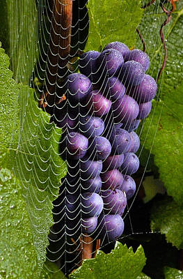 Wine In A Web Art Print by Jean Noren