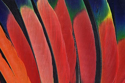 Wing Feather Design From The Amazon Art Print by Darrell Gulin