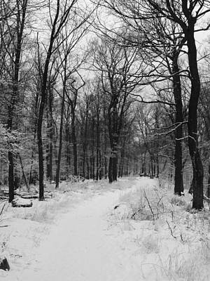 Photograph - Winter Forest by Eva Csilla Horvath