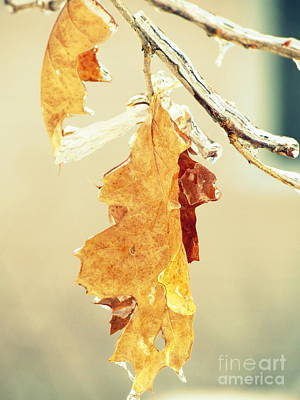 Photograph - Winter Leaves by France Laliberte