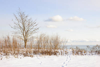 Footprints Photograph - Winter Shore Of Lake Ontario by Elena Elisseeva