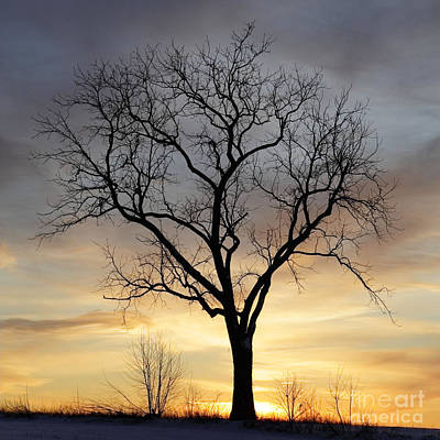 Photograph - Winter Sunset Tree by John Stephens