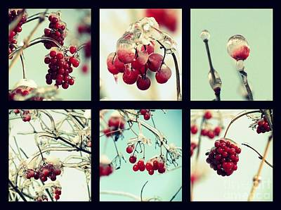 Photograph - Winter Wild Berries by France Laliberte