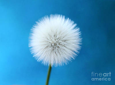 White Flower Photograph - Wish In Blue by Krissy Katsimbras