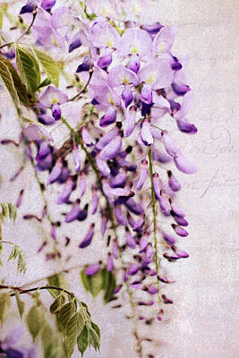 Photograph - Wisteria Petals by Jessica Jenney