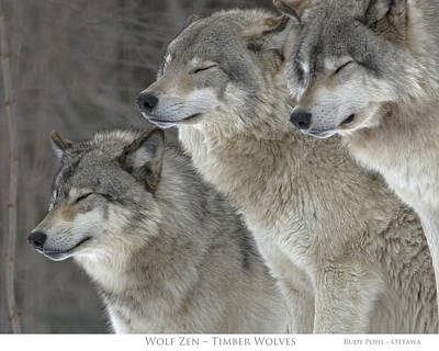 Grey Wolves Photograph - Wolf Zen by Rudy Pohl
